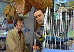 blog_dead_parrot.jpg